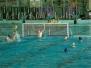 2012-05-26 [R] COOP Savona - SC Quinto 5-5