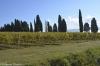Firenze_U15-59