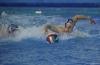 B&B SC Quinto - Chiavari Nuoto-13.jpg