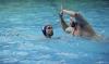 B&B SC Quinto - Chiavari Nuoto-29.jpg