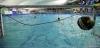 B&B SC Quinto - Chiavari Nuoto-57.jpg