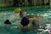 Lerici Sport - SC Quinto B 044