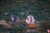 Rapallo Nuoto - Sc Quinto B 075