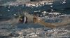 SC Quinto A - Andrea Doria-9