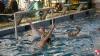 SC Quinto A - Chiavari Nuoto - 064